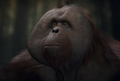 17 minuti di gameplay nel nuovo trailer di Planet of the Apes: Last Frontier